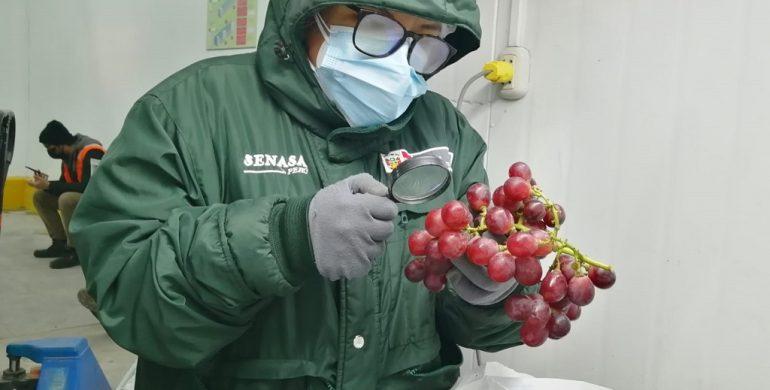 Inicia agroexportación de uvas con Argentina